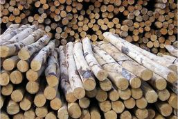 2,5 meter paal hout voor stretchtent